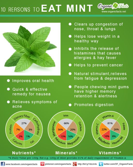 Benefits of Mint infographic